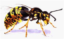 tips gegen insekten homepage of max w lehmann ch 4102. Black Bedroom Furniture Sets. Home Design Ideas
